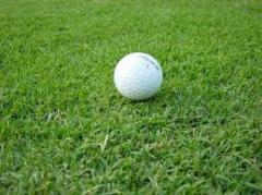 TifSport Turfgrass