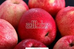 Red fall apple