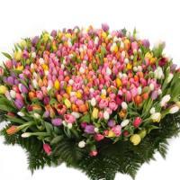 Bouquet of 1001 tulips