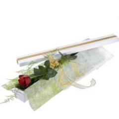Single Red Rose in Presentation Box
