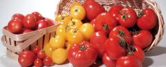 Field-Fresh Vegetables