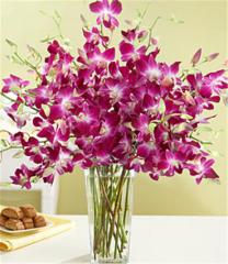 Purple Dendrobium Orchids Bouquet