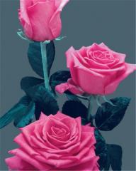 Anuschka Roses