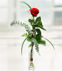 Simply Love Red Rose