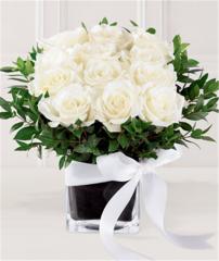 E8-4198 White Rose