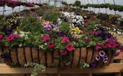 Greenhouses & Nursery