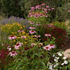 Full Sun Garden Plants