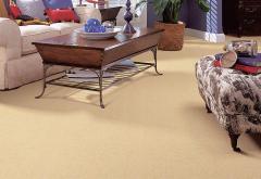Latest Craze Carpet