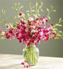 One Dozen Dendrobium Orchids Arranged In A Vase
