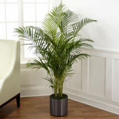The FTD® Palm Plant C28-4891