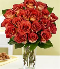 18 Terracotta Roses