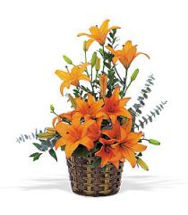 Asiatic Lilies Flowers