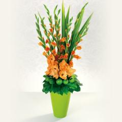 Glorious Gladiolus Bouquet EV 31-21