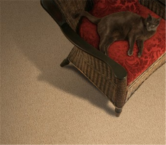 Kiefer by Stainmaster Carpet