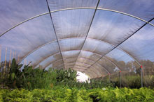 Quonset Structures