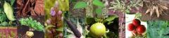 Botanical Ingredients in stock