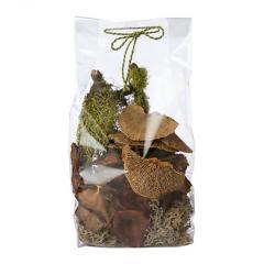 Mushroom Growing Terrarium Kit