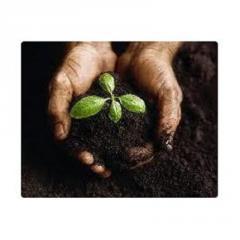 Plant Soil brand