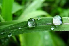 Roth Rainwater Harvesting Systems