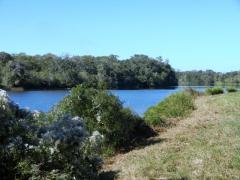 Beautiful 106+ Acres in Brazoria