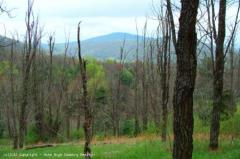 85 Acres of Land for Sale in Virginia Mountains