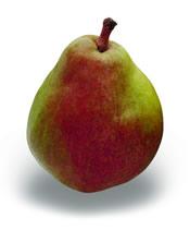 Seckels pears