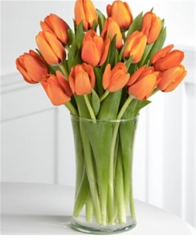 12 Orange Tulips