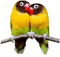 Perrots