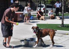 K9 Fountain Dog Bowl