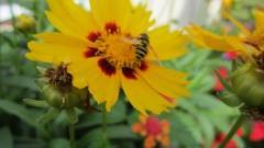 Nursery - Hardy Plants