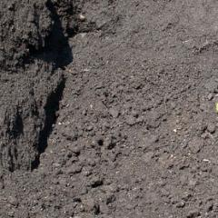 Organic Peat Humus