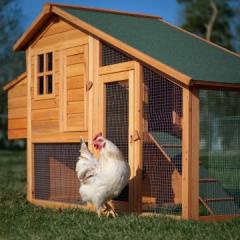 Boomer & George Deluxe Chicken Coop