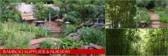Bamboo Nursery & Supplier