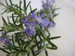 Botanical Teas