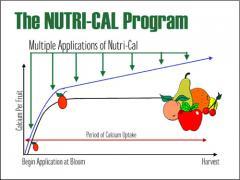 Nutri-Cal - Unlocking The Key To Calcium