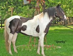 Sparky Horse