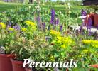 Quality Perennials