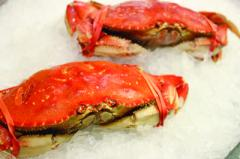 Crab, Dungeness