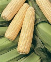 Sugar Buns Corn