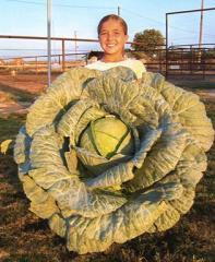Bonnie Mega-Cabbage (OS Cross)