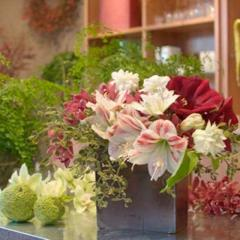 Amaryllis bouquets