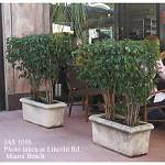 Contemporary One Ring Rectangular Planters