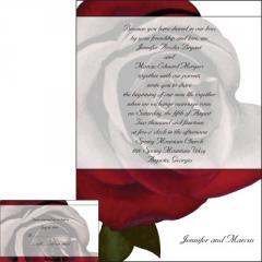 Romantic Rose Greeting Cards