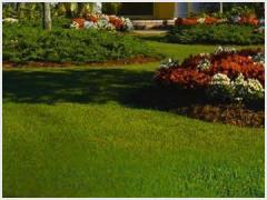 Broadleaf Weed Control Mini-Standard