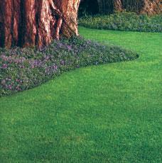 Pre-Emergent Grassy Weed Control Premium