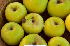 'HoneyCrisp' apple