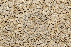 Sunflower grain
