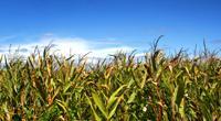 Grains & Oilseeds