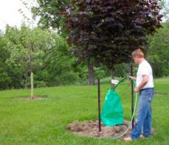 King Tree Watering Bags