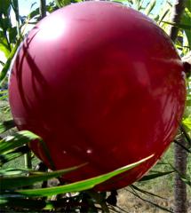 "Large Crystal Burgundy Balloons 17"""